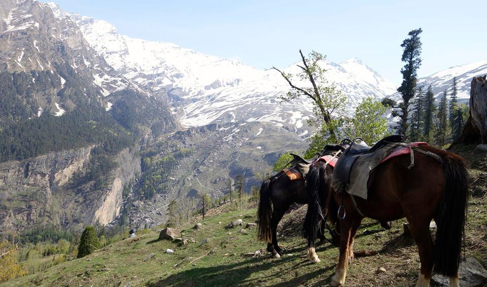 Le nord de l'Inde et sa neige… Hihihi! Shimla, Manali, Dharamsala2015